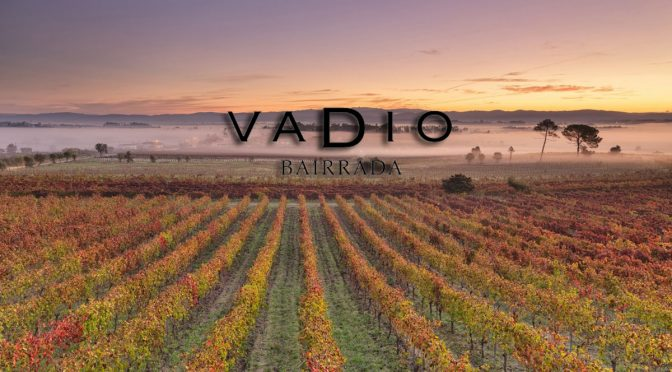 Los vinos de Vadio en Viavélez